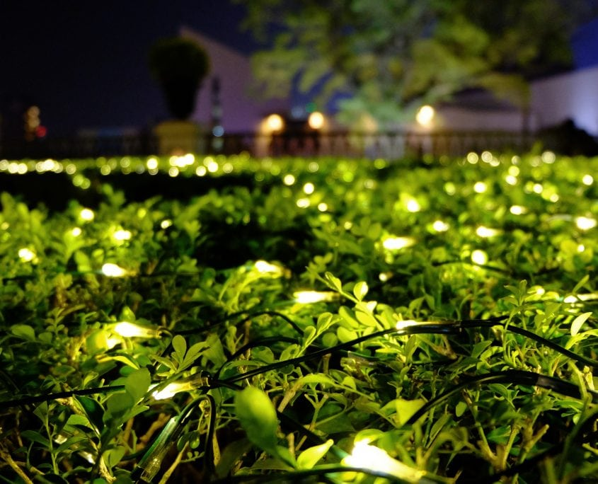 greenery with lights in it garden design