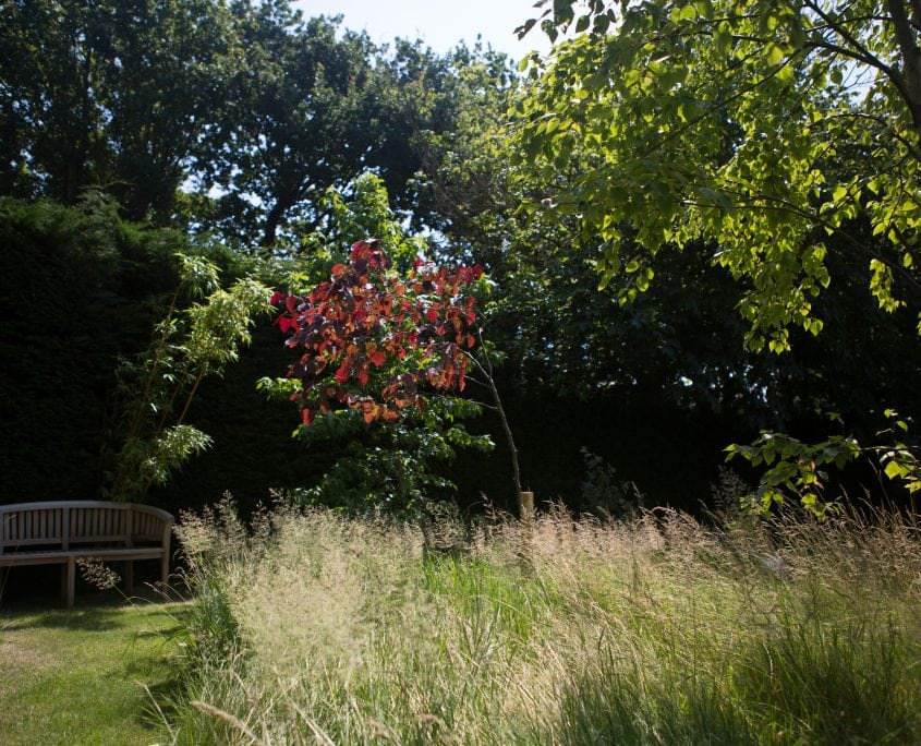 Photo of an Orchard Garden in East Sussex
