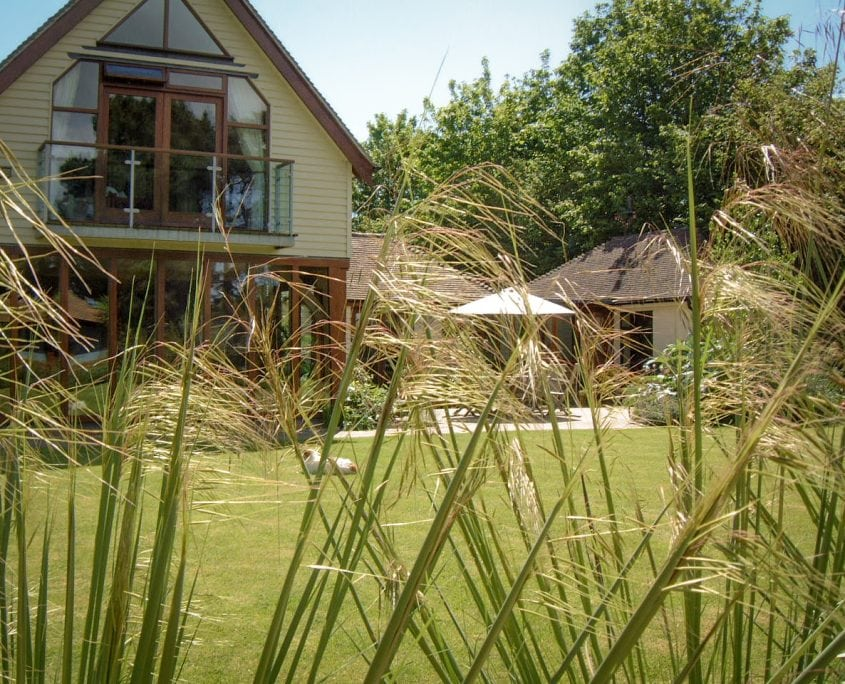 Photo of ornamental grasses in West Sussex garden design