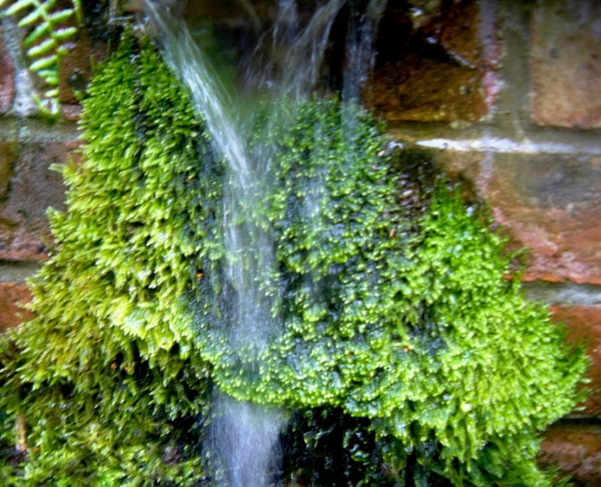 Photo of water feature in west sussex garden