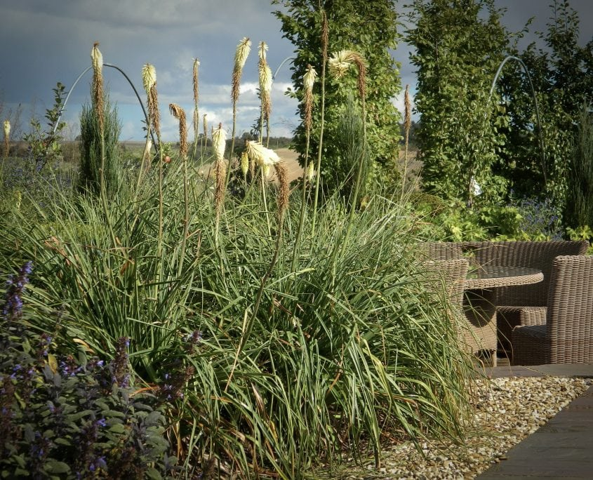 Photo of prairie style planting by the pool at sunrise in south downs garden