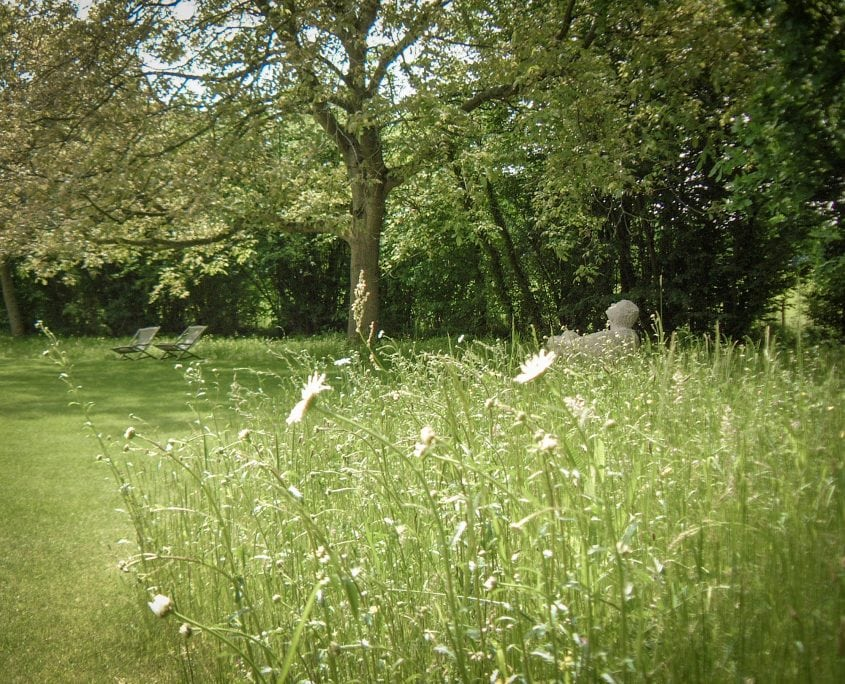 Photo of wildflower daisy meadow country garden petersfield