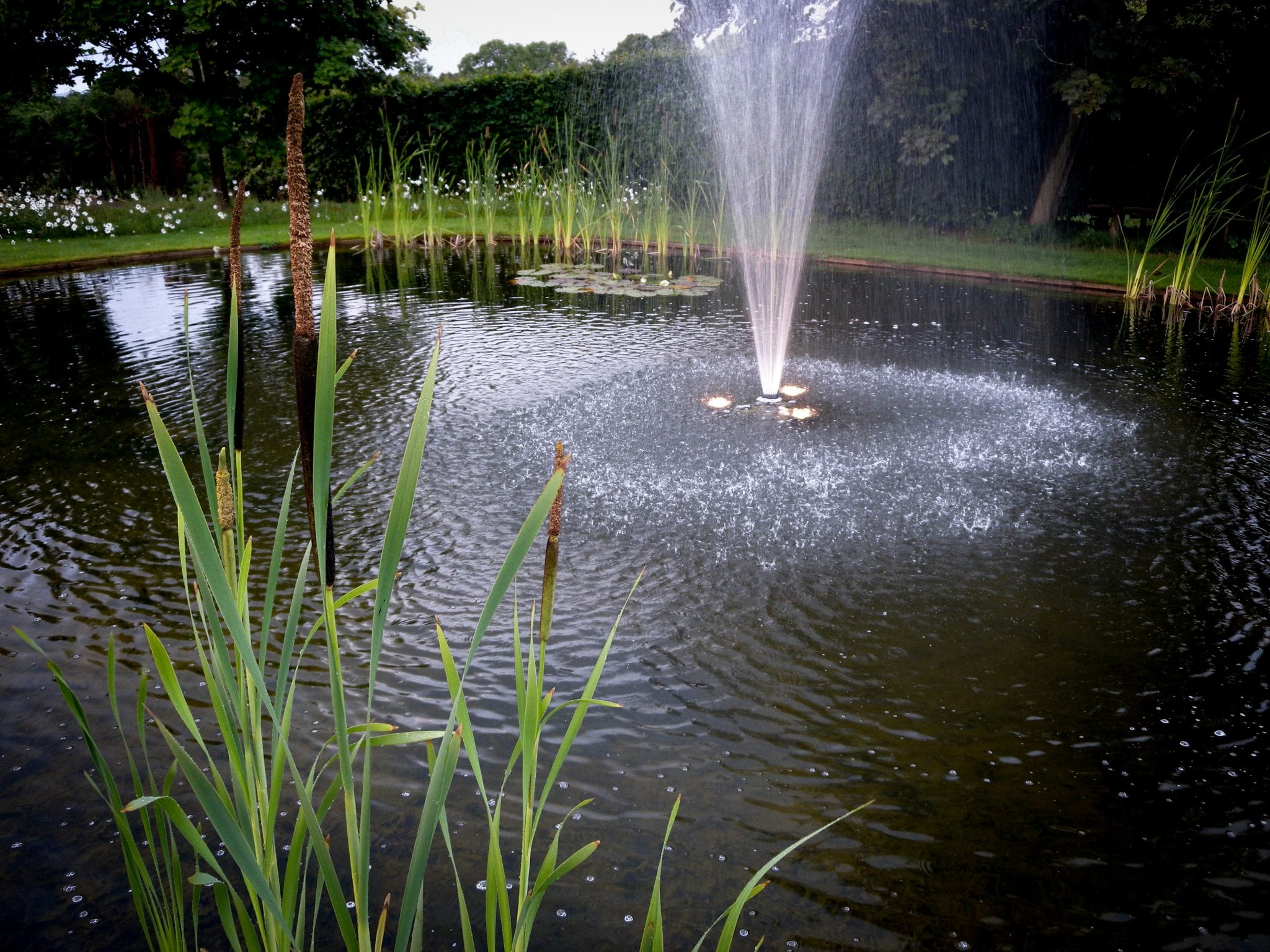 Wildflower fountain 2011 016 mark payne landscape design for Garden pond reddit