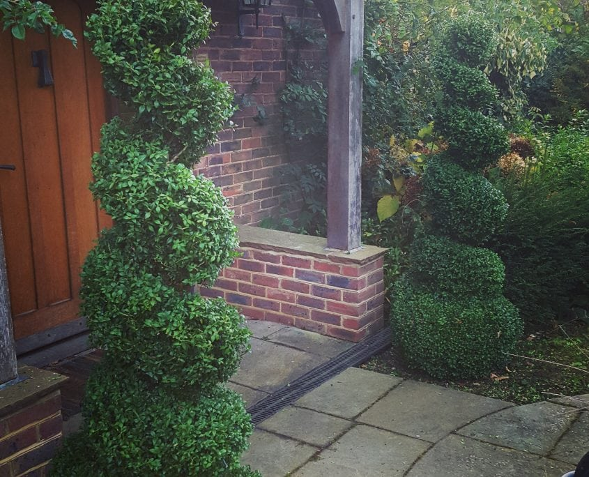 Photo of box spirals garden maintenance