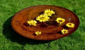 Photo of sunflowers in a CorTen steel water bowl